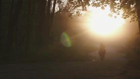 骑师人和妇女骑乘马夫妇通过金黄秋天森林由日落点燃了 浪漫步行概念 股票录像