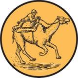 骑师骆驼比赛圈子蚀刻 库存图片
