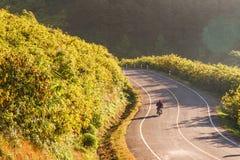 骑摩托车通过花的领域在山 库存图片