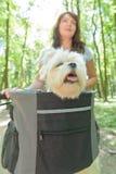 骑有她的狗的美丽的妇女一辆自行车 库存图片