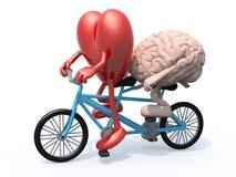 骑纵排自行车的脑子和心脏 库存例证