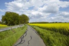 骑自行车与树和开花,黄色菜子领域的车道 免版税库存照片