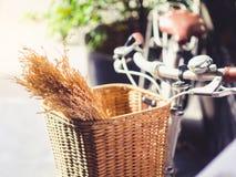 骑自行车与米的耳朵在篮子缓慢的生活行家生活方式e的 库存照片