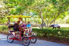 骑自行车在自行车的爸爸和两个小孩男孩在有动物的动物园里 免版税库存图片