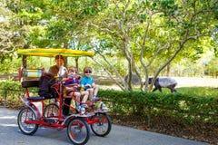 骑自行车在自行车的爸爸和两个小孩男孩在有动物的动物园里 库存图片