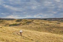 骑自行车在辗压大草原的Moutain 库存照片