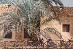 骑自行车在Siwa 免版税图库摄影