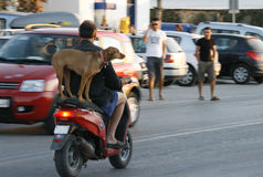 骑自行车的人和狗在路 库存图片