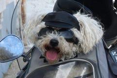 骑自行车的人狗 库存照片