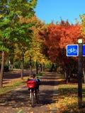 骑自行车的米尼亚波尼斯 库存图片