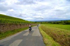骑自行车的葡萄园 免版税库存图片