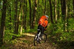 骑自行车的骑自行车者在一串足迹在夏天森林里 免版税库存图片