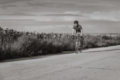 骑自行车者在沿向日葵的领域的一辆路自行车乘坐 免版税库存图片