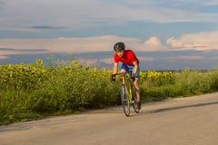 骑自行车者在沿向日葵的领域的一辆路自行车乘坐 库存照片