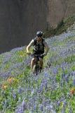 骑自行车者开花的草甸 免版税库存图片