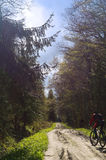 骑自行车者,森林,步行,旅行,冒险,足迹,健康,生活,等级,活动 免版税图库摄影