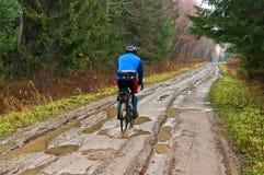 骑自行车者,道路在森林里 免版税库存图片