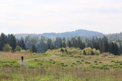 骑自行车路径 图库摄影