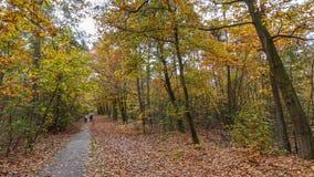 骑自行车通过森林在荷兰 免版税库存照片