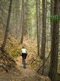 骑自行车通过森林的山 免版税库存照片