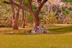 骑自行车采取从在距离的一棵树下面 免版税库存图片