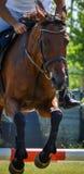 骑马在jodhpurs的展示跳跃的特写镜头马车手 免版税库存照片