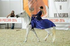 骑马大厅国际马展示 蓝色礼服女性车手的妇女骑师在一个白马 库存图片
