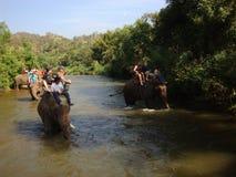 骑马大象在河 库存照片