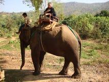 骑马大象 免版税库存图片