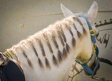 骑马展示跳跃的特写镜头马 免版税图库摄影