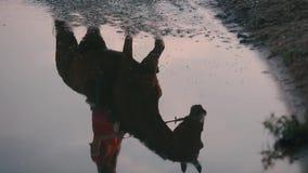 骑马的女孩,反映在水 股票视频