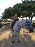 骑马的孩子 免版税库存照片