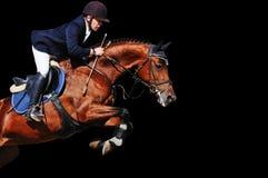 骑马者:与海湾马的车手在跳跃的展示,被隔绝 库存图片