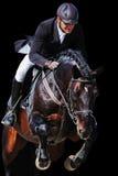 骑马者:与海湾马的车手在跳跃的展示,被隔绝 免版税库存图片