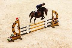 骑马 显示跳过,马和车手跃迁 免版税库存图片