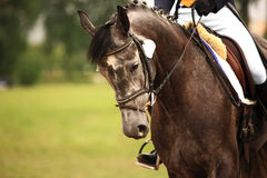 骑马 免版税库存照片