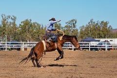 骑A顽抗的野马的牛仔在国家圈地 免版税图库摄影