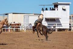 骑A顽抗的野马的牛仔在国家圈地 库存照片