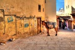 骡子和两只猫在一个胡同休息在Fes在非洲国家摩洛哥 免版税库存图片