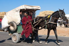 驴骡推车 免版税库存图片