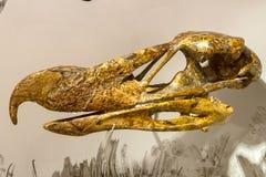 头骨古老不能飞行的鸷在自然的hermosiornis 图库摄影