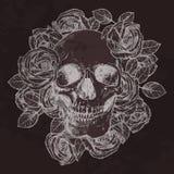 头骨和玫瑰在黑板 图库摄影