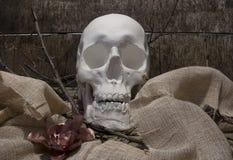 头骨和花分支 免版税图库摄影