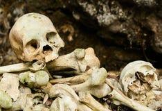 头骨和骨头 免版税库存照片
