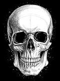 头骨图画线工作传染媒介 库存例证