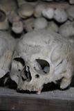 头骨在土窖 库存图片