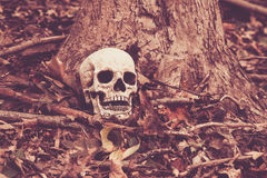 头骨在森林 库存图片