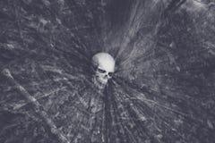 头骨在森林 免版税库存图片