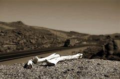 骨头沙漠 免版税库存照片
