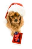 骨头配件箱逗人喜爱的狗帽子圣诞老&# 库存图片